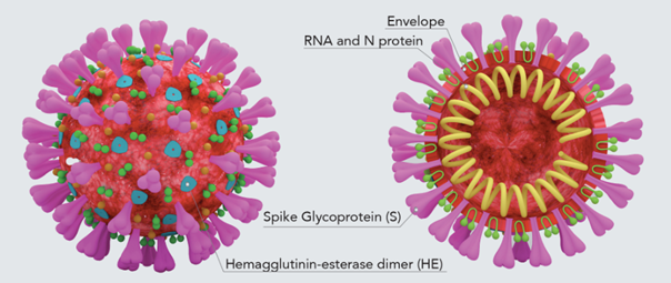 Diagram of SARS-CoV-2 virus particle with possible antigen structures labeled