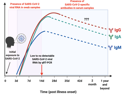 The profiles for viral RNA or antibodies detected in SARS-CoV-2-infected individuals